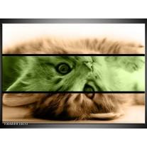 Glas schilderij Kat | Groen, Bruin