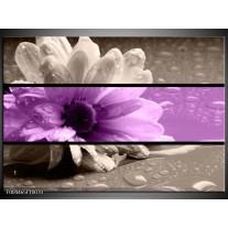 Glas schilderij Bloem | Paars, Grijs, Zwart