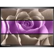 Glas schilderij Roos | Paars, Grijs
