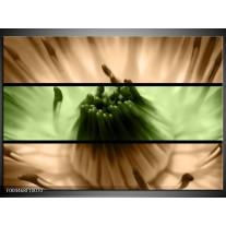 Foto canvas schilderij Bloem | Groen, Bruin, Zwart
