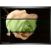 Foto canvas schilderij Roos | Groen, Bruin, Zwart