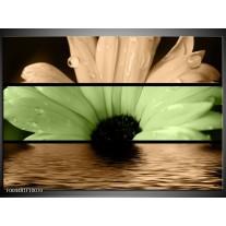 Foto canvas schilderij Bloem | Bruin, Groen, Zwart