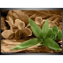 Foto canvas schilderij Orchidee | Groen, Bruin