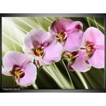 Glas schilderij Orchidee | Groen, Paars