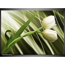 Foto canvas schilderij Tulp | Grijs, Wit, Groen