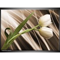 Glas schilderij Tulp | Bruin, Wit, Groen