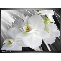Glas schilderij Orchidee | Wit, Grijs, Groen