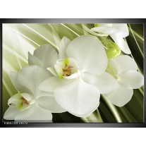 Glas schilderij Orchidee | Groen, Wit