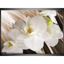 Foto canvas schilderij Orchidee | Wit, Bruin