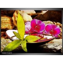 Foto canvas schilderij Orchidee | Paars, Groen, Bruin