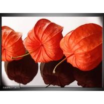 Foto canvas schilderij Keuken | Oranje, Wit
