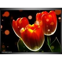 Foto canvas schilderij Tulp | Oranje, Geel, Rood