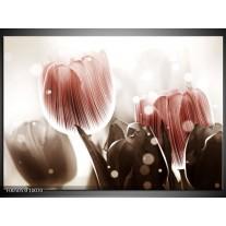 Foto canvas schilderij Tulp | Bruin, Grijs