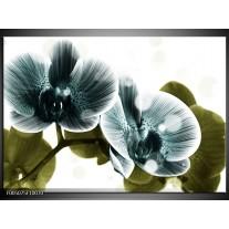 Foto canvas schilderij Orchidee | Blauw, Groen