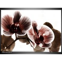 Foto canvas schilderij Orchidee | Bruin, Wit