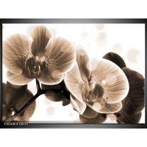 Foto canvas schilderij Orchidee | Grijs, Wit
