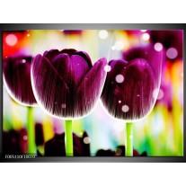 Foto canvas schilderij Tulp | Paars, Geel,