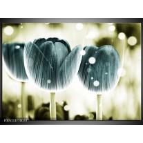 Foto canvas schilderij Tulp | Blauw, Wit