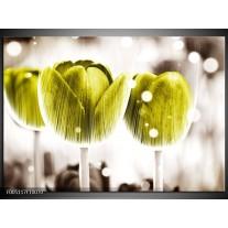 Foto canvas schilderij Tulp | Geel, Wit