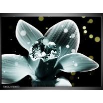 Foto canvas schilderij Iris | Blauw, Zwart