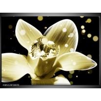 Foto canvas schilderij Iris | Geel, Zwart