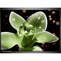 Foto canvas schilderij Iris | Groen, Zwart