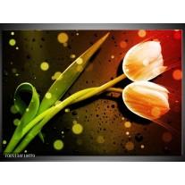 Foto canvas schilderij Tulp   Oranje, Groen, Rood