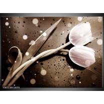 Foto canvas schilderij Tulp   Wit, Grijs