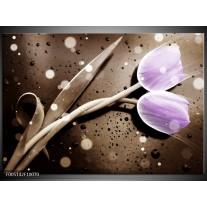 Foto canvas schilderij Tulp | Paars, Grijs