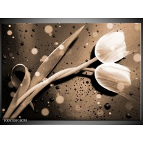 Foto canvas schilderij Tulp | Grijs, Wit
