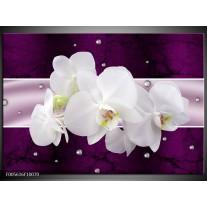 Foto canvas schilderij Orchidee | Zwart, Wit, Paars