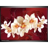 Foto canvas schilderij Orchidee | Rood, Wit, Creme