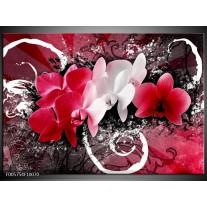 Foto canvas schilderij Orchidee | Roze, Wit, Zwart
