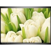 Foto canvas schilderij Tulpen | Wit, Groen
