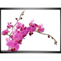 Foto canvas schilderij Orchidee | Roze, Wit