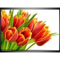 Foto canvas schilderij Tulpen   Oranje, Groen, Wit