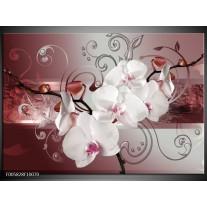 Foto canvas schilderij Orchidee | Wit, Grijs