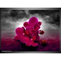 Foto canvas schilderij Orchidee   Rood, Grijs, Paars