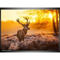 Glas schilderij Hert | Bruin, Geel
