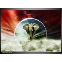 Foto canvas schilderij Olifant | Rood, Blauw, Wit