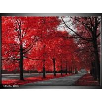 Foto canvas schilderij Bomen | Rood, Grijs, Wit