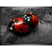 Foto canvas schilderij Lieveheersbeestje | Rood, Zwart, Grijs