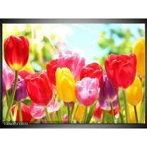 Foto canvas schilderij Tulpen | Rood, Geel, Paars