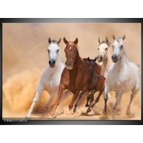 Glas schilderij Paard   Bruin, Wit, Crème