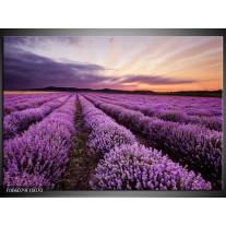 Foto canvas schilderij Lavendel | Paars