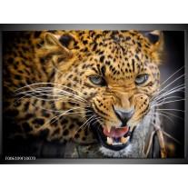 Glas schilderij Luipaard   Bruin, Zwart