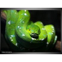 Foto canvas schilderij Natuur | Groen, Zwart