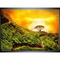 Foto canvas schilderij Natuur | Groen, Oranje, Geel