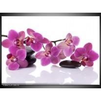 Foto canvas schilderij Orchidee   Paars, Wit