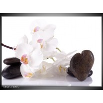 Foto canvas schilderij Orchidee | Wit, Zwart